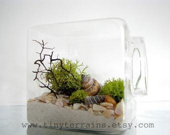 Modern Beach Cube Lichen Terrarium: White, Natural or Black Sand