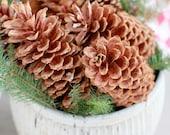 Fresh California Sugar Pine Cones