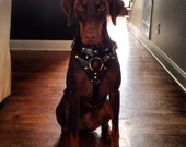 Custom Tracking Dog Harness by Pleasant Pup Custom Leatherworks