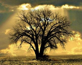 Lonely Tree  Art Print / Cottage Chic / Rustic Tree / Single Tree Art