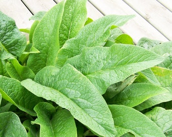 RAW Sun Dried Comfrey - Organically Grown, Hand Harvested - Food Market - Herbs and Spices