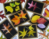 Autumn Leaves Note Cards - Fall Leaves on Black and Craft - Set of Six