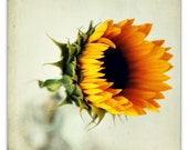 sunflower photograph, fall decor, autumn, flower photography, yellow, sunshine, honey gold, green, vintage bottle - 8x8 photograph