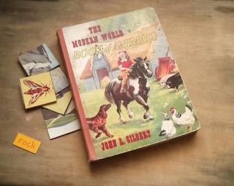 Vintage Children's book of Animals 1950s The Modern Book of Animals by John R. Gilbert