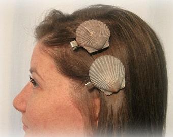 One Genuine Gray Sea Scallop Seashell Hair Barrette