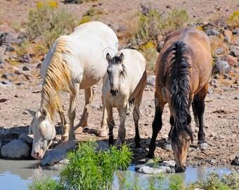 "At Water - Mustangs - 8.5"" x 11"""