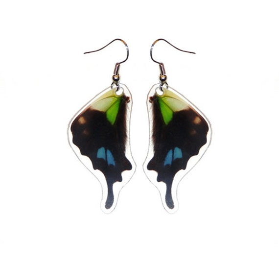REAL butterfly wing earrings - Graphium Weiskei