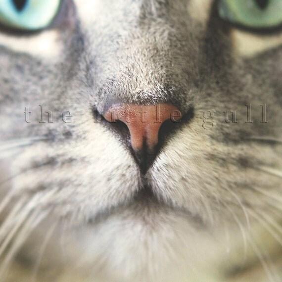 8 x 8 fine art print - Pretty Kitty