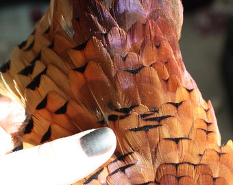 Wholesale Discount Pheasant Feathers, 150-200 Very High Quality Feathers in Orange and Iridescent Blues and Reds