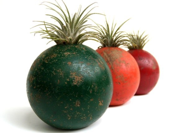 Repurposed Croquet Ball with Air Plant