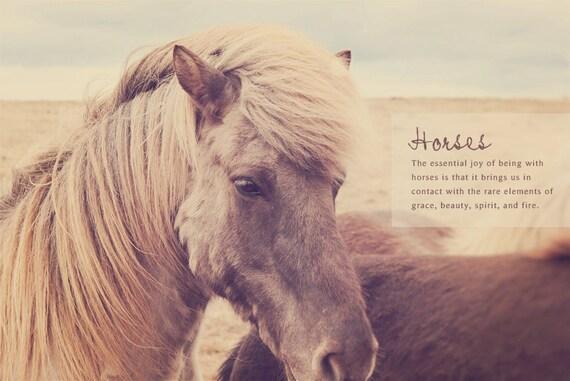 Fuzzy Horses Furry Horses Iceland Horses Fuzzy By