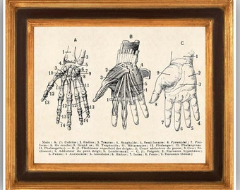 Skeleton Hand, Anatomy Hand, educational chart, education learning, Hand Anatomic Poster, 14x11 educational kids furniture school