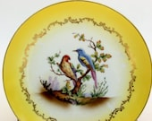 Painted Parrot and Bludbird on Vintage Rudolstadt yellow and gold plate.