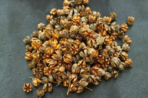 Crape Myrtle Seed Pods