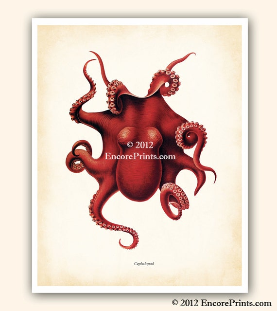 RED OCTOPUS Antique Art Print Marine Beach House Decor Book Plate Reproduction 8x10 inches Plate