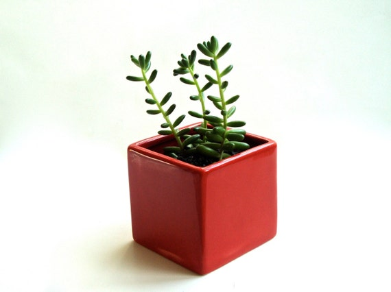 Little Modern Glossy Red Ceramic Cube Planter Modern Red