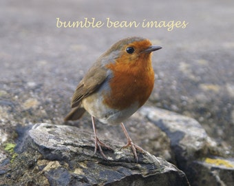 Robin Greetings Card. Robin sitting on a wall Photographic card. Printed on semi-gloss card. A6 size. Blank.  Winter, Christmas Card.
