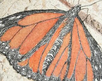 MONARCH, butterfly, original zinc plate etching