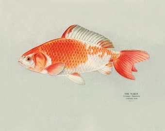 Popular items for fish wall art on etsy for Ornamental pond fish golden