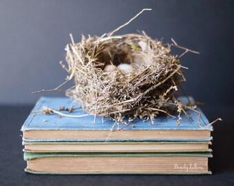 nesting, nature,birds nest, books, vintage, fine art photography