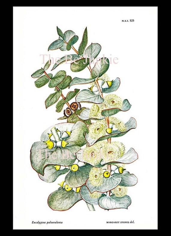Eucalyptus Essential Oil 1oz., Aromatherapy, DIY Perfume Blending