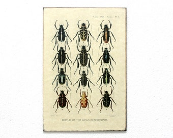 "Beetles Retro Wood Wall Art 8x12"" 20x30 cm, Educational Board, MDF Board, Wall Hanger, Art Deco Room Decor, Shabby chic, Natural History"