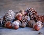 Pine cones Acorns Birch Bark with glitter to look lightly frosted Christmas table Winter wedding Christmas Decoration basket filler