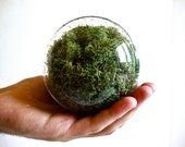Hanging Glass Globe with Lush Green Preserved Moss, Hanging Glass Orb, Hanging Glass Ball, Hanging Glass Sphere, Hanging Ball, Hanging Globe
