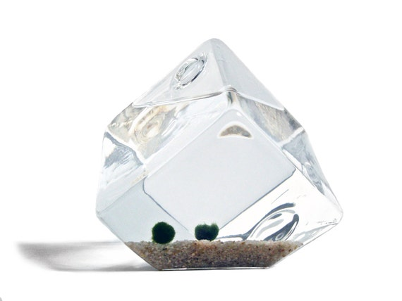Melting Ice Cube Marimo Moss Ball Couple Aquarium, Melting Ice Cube Vase with Marimo Balls