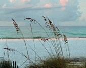 Sea Oats View
