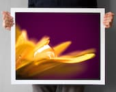 Chrysanthemum Macro Photograph 16x20, Autumn Mum Flower Home Decor, Chrysanth Macro Photography, Petals Waterdrops, Gift for her