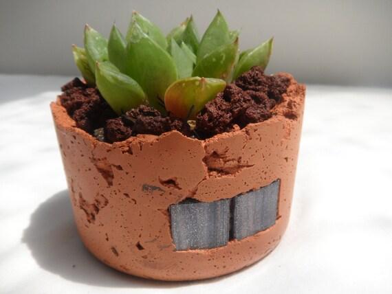 Hawarthia in hand created rustic planter