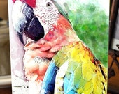 Colorful Macaw Greeting Card