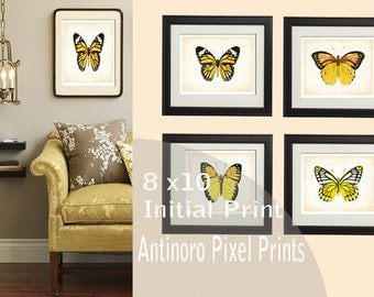 Yellow Butterfly Chic Digital illustration Wall Art - (4) 10x8 Prints  Unframed.