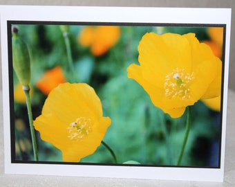 photo card, yellow poppies, flower photograph