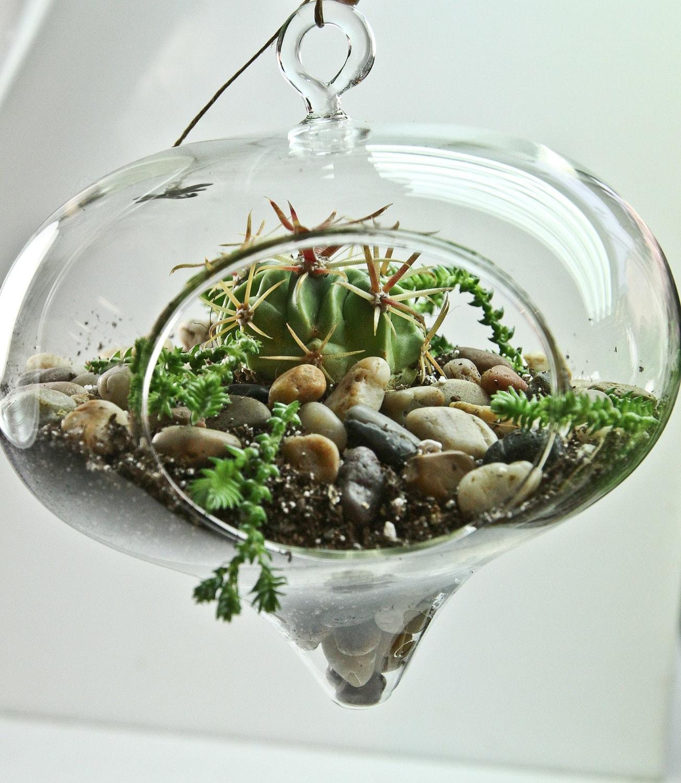 cactus hanging terrarium. Black Bedroom Furniture Sets. Home Design Ideas