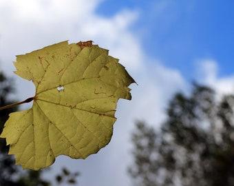 Nature Photography - Fine Art Print  - Yellow Autumn Leaf Blue sky Fall Wall Art Home Office Decor
