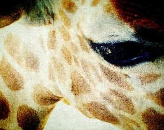 Inquisitive - 8x10 Giraffe eye print spots nature animal photography home nursery kids room decor childrens wall art brown close up lashes