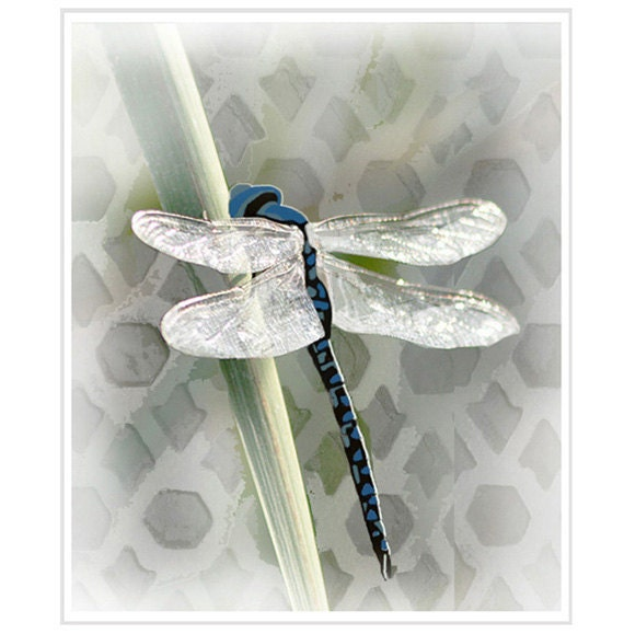 Dragonfly Art Print, Dragonfly Wall Art, Insect Art, Insect Print, Illustration, Home Decor  / 8x10in