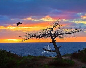 8x12 Photo of a Pelican Heading Home.  Photo of Pacific Sunset in La Costa - Carlsbad, California