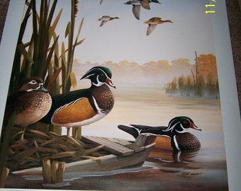 15.5 x 20 Vintage Print by Leo Stans ~ Conservation Edition 1993 ~ Autumn Air ~ Wood Ducks