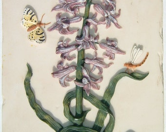 Decorative Hyacinthus Orientalis L. Wall Plaque Design by Decoline New York for Home & Garden