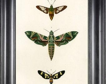 BUTTERFLY PRINT D'Orbigny 8x10 Botanical Art Print 8 Beautiful Antique French Butterflies Natural History Garden Nature Illustration