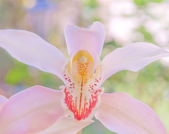 Orchid Photograph Digital Download Nursery Art Pastel Flower Instant download Photography delicate photo pastel wall art