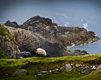 The Sheep on the Irish Cliffs - Photograph, Luster Print - Ireland, Achill Island