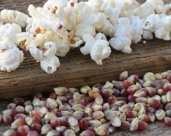 Shaman's Blue Gourmet Hostess Gift  Popcorn Kernels Kansas Grown 16 oz Bag