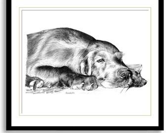 All My Dreams...Sleepy Irish Setter Puppy - 11x14in print