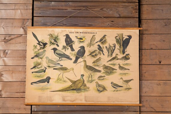 Vintage Belgian Forest and Meadowbirds