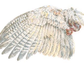 Pheasant Wing, 8x10 print
