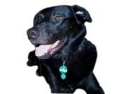 Pet Protection Pendants